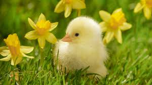 spring birds and flowers wallpaper full hdq spring birds and
