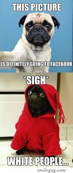 Funny Pug Memes - 10 hilarious pug memes