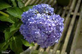 ornamental flowering plants n grow it