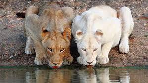 imágenes asombrosas naturaleza 12 asombrosos animales albinos que rara vez encontrarás en la