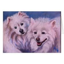 american eskimo dog calendar american eskimo dog greeting cards zazzle