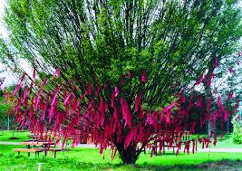 wishes tree tamer serbay artwork celeste network