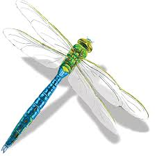 a visit from a dragonfly and its symbolism being