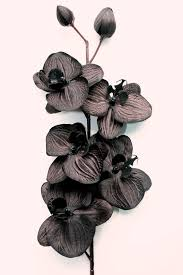black orchid flower 16 inch black orchid floral stem spray with 5 by simplyserra