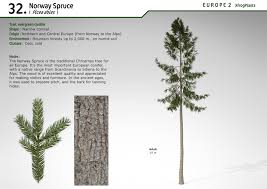 xfrogplants norway spruce xfrog com