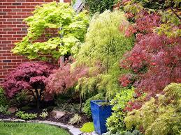 160 Best Maples Images On Pinterest Japanese Maple Botany And