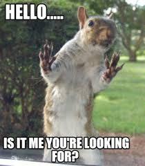 Squirrel Meme - meme creator squirrel meme generator at memecreator org
