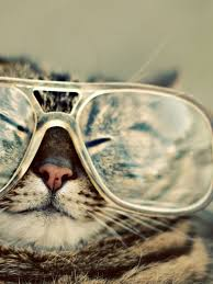 funny wallpaper for ipad 768x1024 funny cat with glasses ipad mini wallpaper
