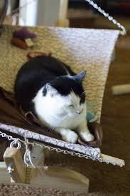 Homemade Cat Hammock by Diy Cat Hammock Diy Cat Scratching Tree At Home