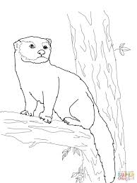 fisher cat coloring page free printable coloring pages