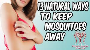 13 natural ways and home remedies to keep mosquitoes away how to