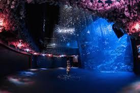 enjoy the fresh feeling of spring dancing around kyoto aquarium