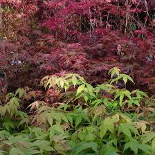 ornamental trees blogs about ornamental and fruit trees