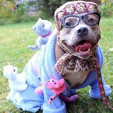 Sheep Dog Costume Halloween Halloween Costume Crazy Cat Lady Pitbulls