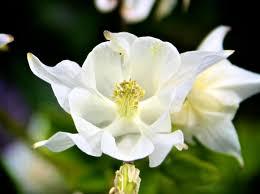canada flowers flowers to inspire by mimi luk mimi luk