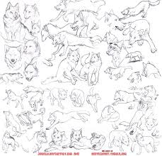 wolf study sketches by jeakilo on deviantart