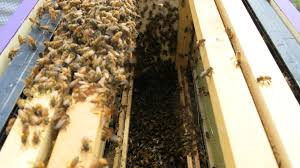 about hive time u2013 hive time a bee adventure for everyone