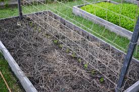 Pole Bean Trellis Diy Trellis Ideas For Beans Peas And How They U0027re Different