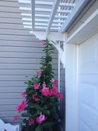 arbor over garage door with mandevilla vine completed projects