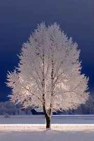 snow tree stockholm what a beautiful colour contrast of the