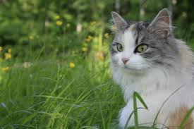 cats cat grey backyard white grass because picture cats hd 16 9