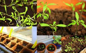 Permaculture Urban Garden Urban Permaculture U0026 Balcony Compost U2013 The Urban Observer