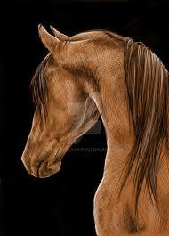 arabian horse by last trace on deviantart