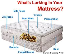 Bed Bug Cleaning Services Carpet Cleaning Upholstery Cleaning Mattress Cleaning