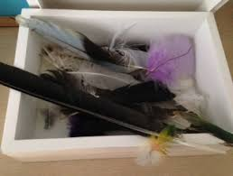 feather signs colour meanings kuna psychic medium