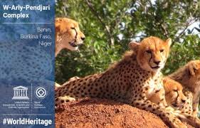 sle resume journalist position in kzn wildlife cing africa link magazine