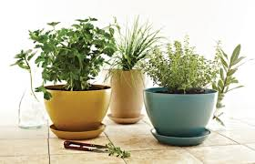 Herbs Indoors How To Grow An Indoor Herb Garden Vegetarian Times