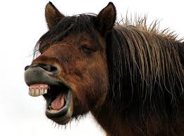 Big Teeth Meme - horse laugh dentist teeth big funny smile funny images fun bajiroo