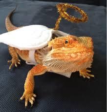 sarah u0027s bearded dragon rescue dress up time etsy costume upgrades