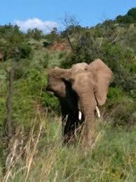 south africa bethbeck u0027s blog