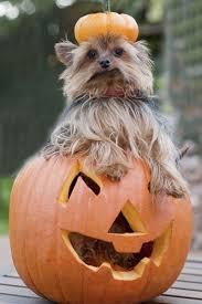Animal Halloween Costumes Animal Halloween Costumes Pet 22