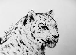 coloring pages dazzling baby leopard drawing coloring pages baby
