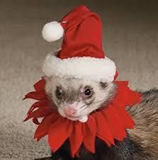 Hamster Halloween Costumes Amazon Ferret Prisoner Halloween Costume Rubber Stamp