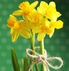 Birth Flowers By Month - march birth flower of the month u2013 the daffodil conklyn u0027s florist