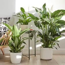 plant on desk buy plants for desk space online patch