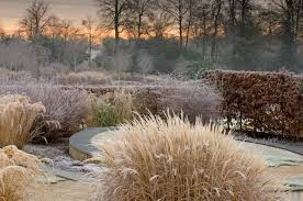 great ornamental grasses for your winter garden