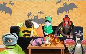 Parakeet Halloween Costume Parakeet Halloween Cards Sloppy Kiss Cards