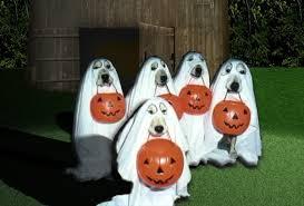 Batman Robin Dog Halloween Costumes Halloween Costume Dogs