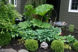 Mulching Vegetable Garden by Black Gold Use Garden Mulch To Reduce Summer Watering Black Gold