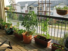 apartment deck garden garden ideas