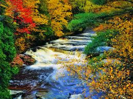 in fall mountain stream with flowers wallpaper
