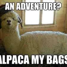 Alpaca Meme - alpaca my bags for an adventure
