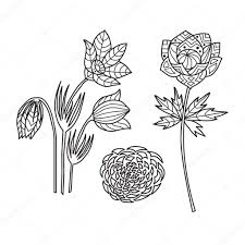 zentangle the baikal wildflowers for anti stress coloring
