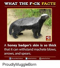 Meme Honey Badger - what the fck facts facts a honey badger s skin is so thick that it