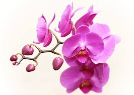 orchid plant free photo orchid plant flower blossom free image on pixabay