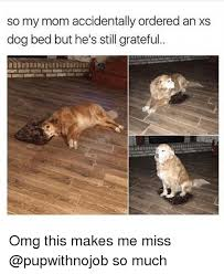 Dog In Bed Meme - so my mom accidentally ordered an xs dog bed but he s still grateful